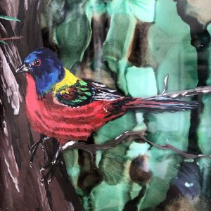 Painted Bunting #1
